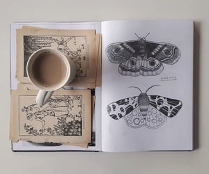 butterfly and journal image