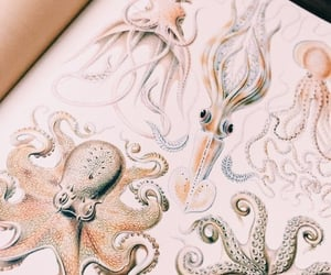 fabulous, fashion, and octopus image