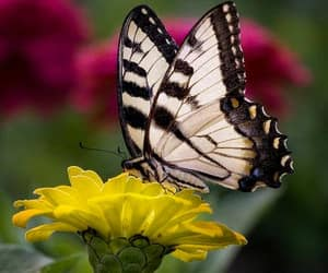 flowers, beautiful, and butterfly image