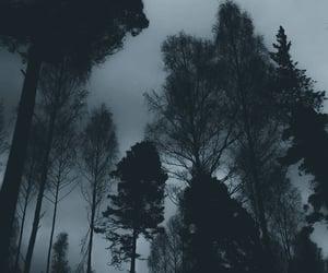 dark and woods image