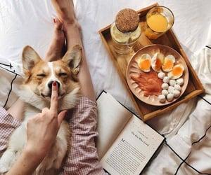 dog, food, and love image