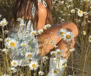 blogger, daisies, and photoshoot image