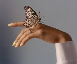 aesthetic, butterfly, and nails image
