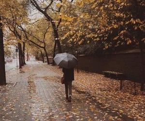 rain, fall, and autumn image