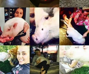 miley cyrus, pig, and instagram image