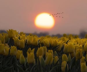 birds, dreamy, and sun image