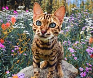 cat, animal, and nature image