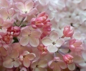 jasmine, pink flowers, and beautiful image