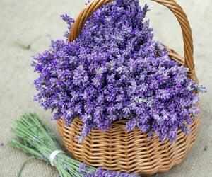 beauty, flower, and lavander image