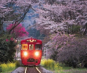 asia, beautiful, and cherry blossom image