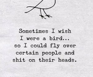 birds, dreams, and quote image