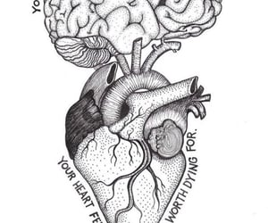 brain, heart, and stay image