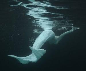 mermaid, mermaid tail, and white mermaid tail image