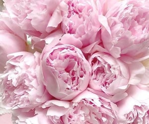 flowers, peonies, and beautiful image