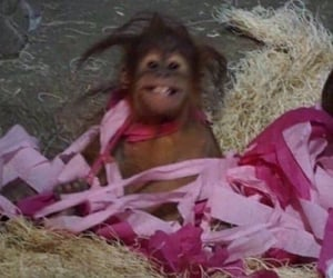 meme, monkey, and funny image