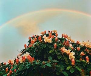 flowers and rainbow image