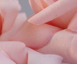 color, details, and flower image