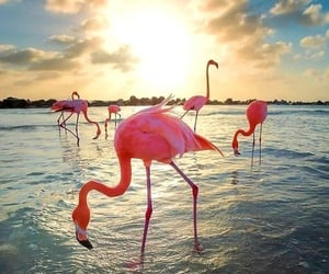 flamingo, beautiful, and beach image
