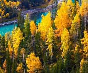 autumn, mother nature, and verde image
