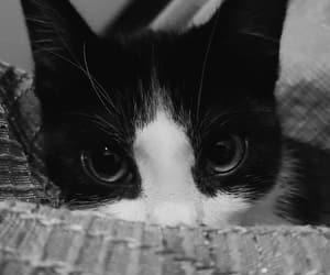 cat, portada, and blancoynegro image