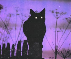 cat, black, and purple image