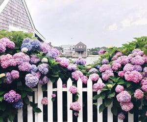 цветы, забор, and розы image