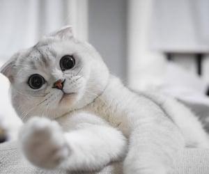 кот, мило, and котик image