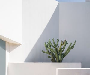 aesthetics, cactus, and open air image