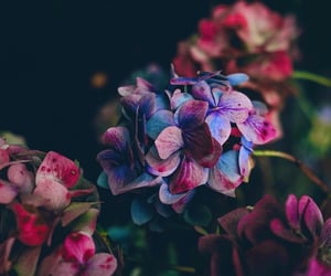 colors and flowers image