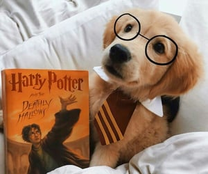 dog, harry potter, and puppy image