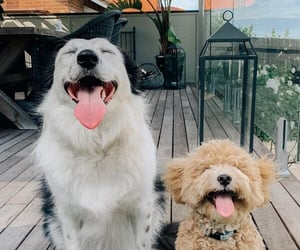 animals, cuteness, and dogs image