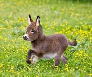 animal, donkey, and burrito image
