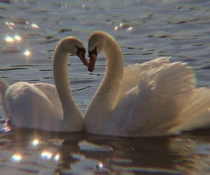 Swan, aesthetic, and theme image