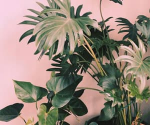 background, plants, and wallpaper image