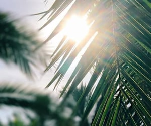green, sun, and wallpaper image