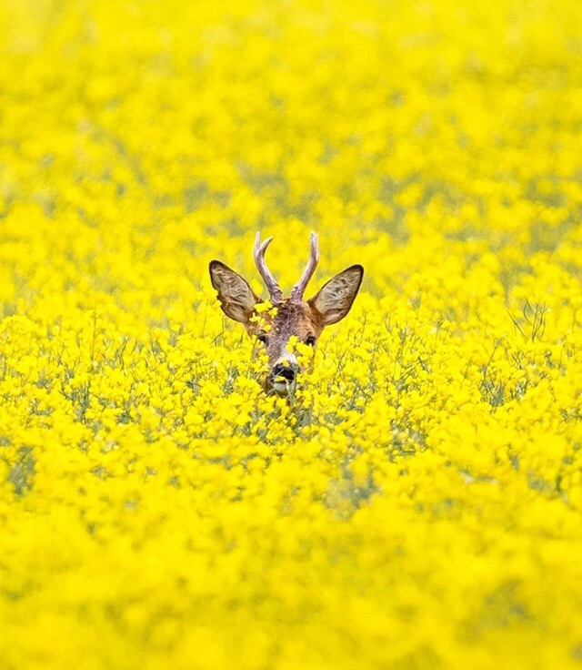 deer, flowers, and yellow image