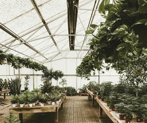 beautiful, green, and greenhouse image