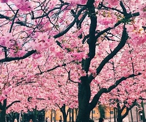 background, pink, and trees image