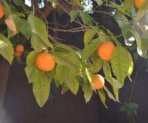 fruit, green, and italian image