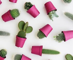 wallpaper, cactus, and green image