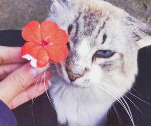 cutecat cat image