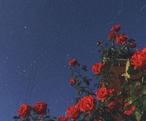 aesthetic, blue sky, and flowers image