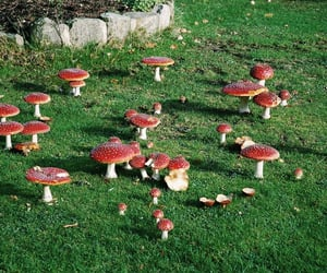mushroom, aesthetic, and fairy image