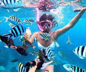 adventure, ocean, and snorkeling image