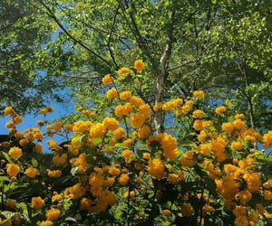 flowers, yellow, and nature image