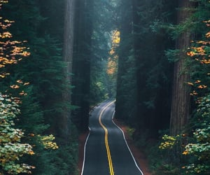 forest, road, and green image