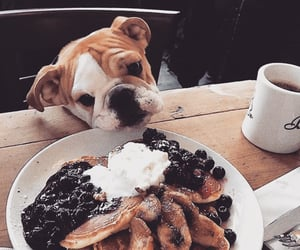 dog, food, and pancakes image