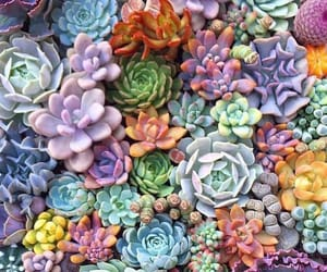 nature, plants, and cactus image