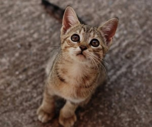 cat, adorable, and animal image