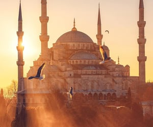 birds, city, and istanbul image